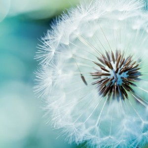 Open Mindfulness Training