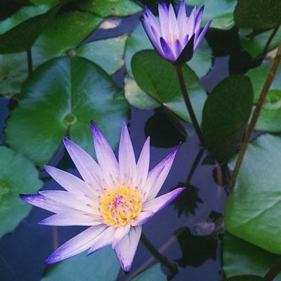 Séminaire Open Mindfulness Training