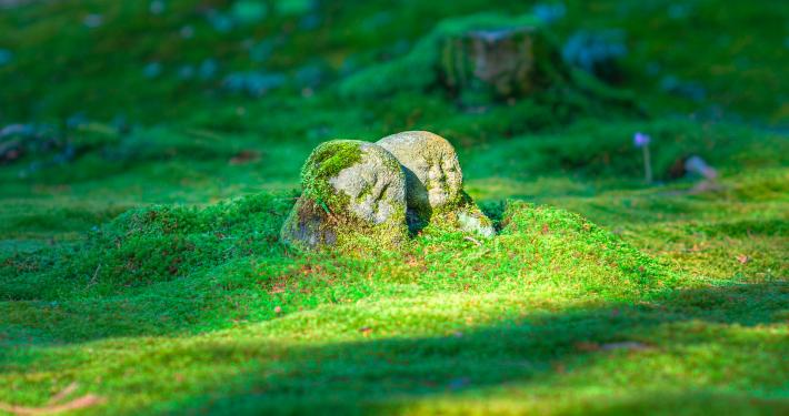 Pleine Présence & Intelligence émotionnelle II – La sagesse des émotions